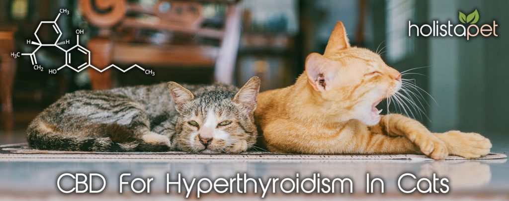 What Is Hyperthyroidism In Cats Can You Use Cbd