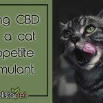 CBD-appetite-stimulant