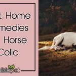 Home Remedies For Horse Colic