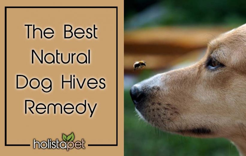 The Best Natural Dog Hives Remedy Header