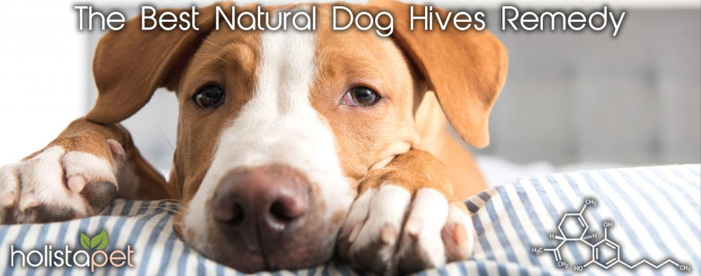 natural dog hive remedy HolistaPet banner
