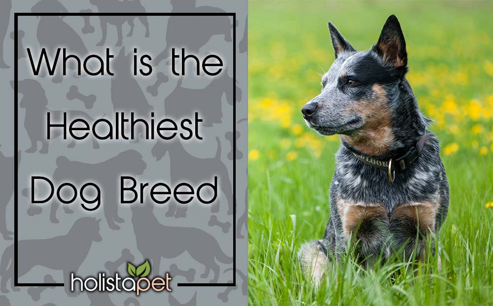 what is the healthiest dog breed