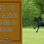 Cbd Oil For Equine Arthritis In Horses