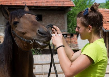 administering cbd oil to horse
