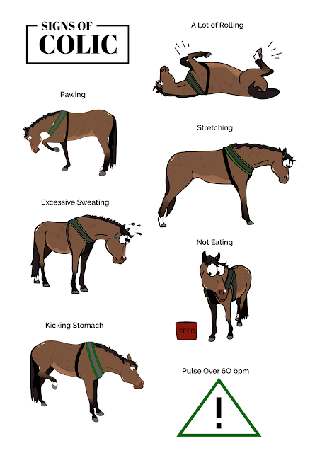 Signs of colic in horses