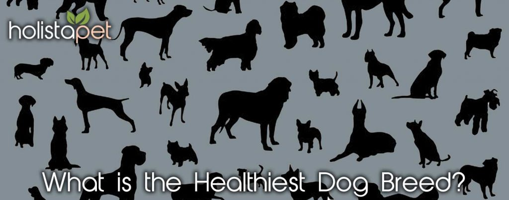 what's the healthiest dog breed
