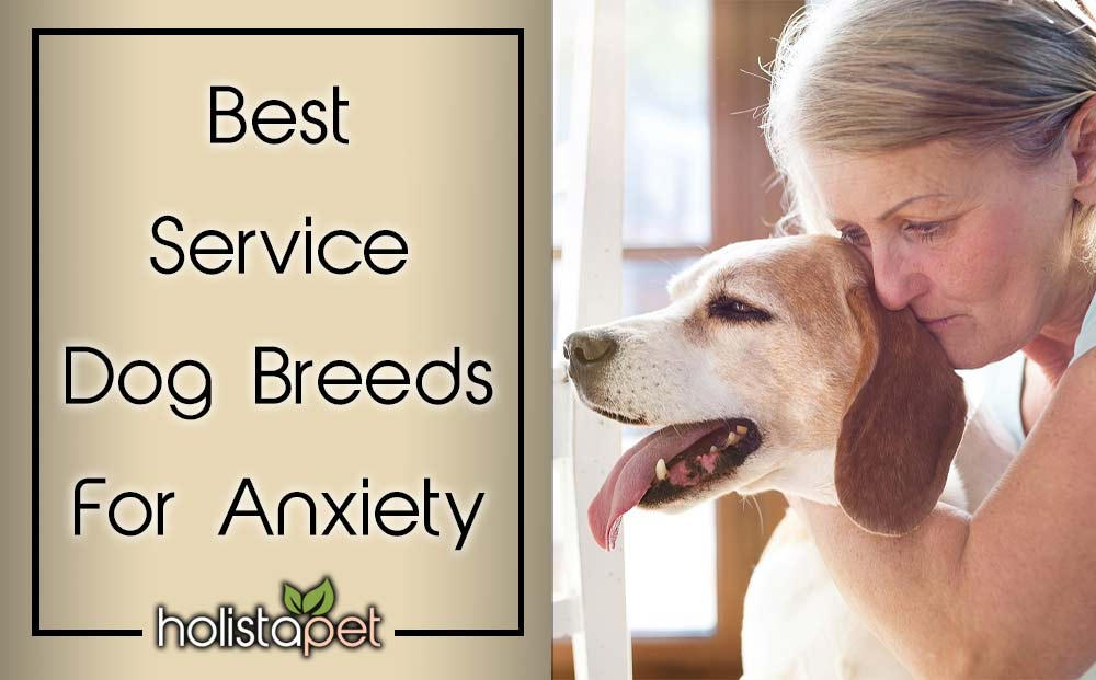 Best Service Dog Breeds For Anxiety