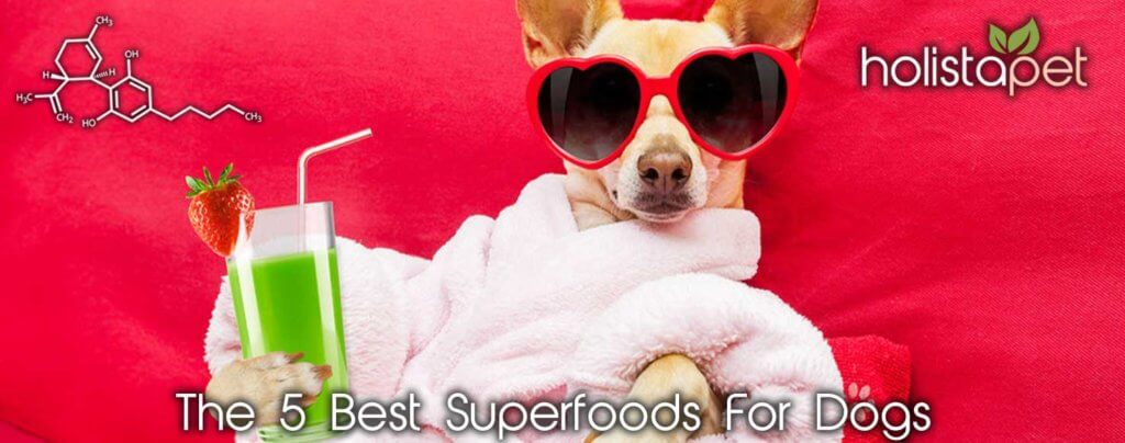 5 superfoods for dogs