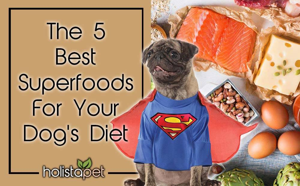 5 best superfoods for dogs