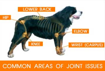 common areas of joint issues in dogs
