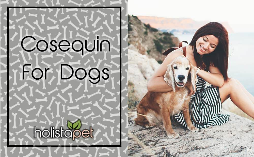 Cosequin For Dogs 101 Header