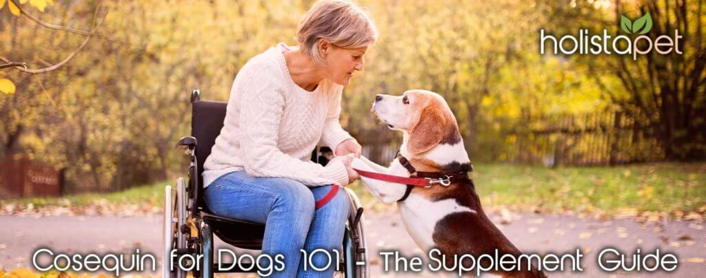 Cosequin for Dogs 101 Supplement Guide