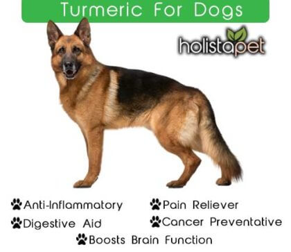 Why Turmeric is So Powerful for Dogs [Supplement Guide