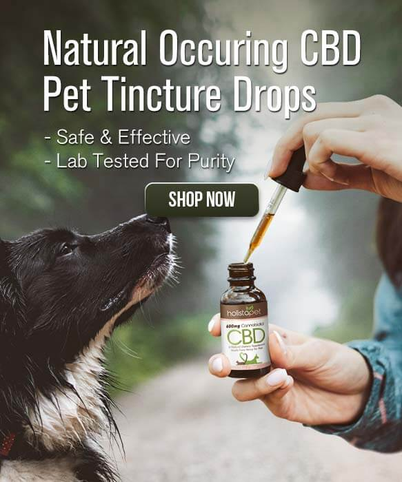 1 Organic CBD for Pets | CBD Oil for Cats & Dogs | HolistaPet
