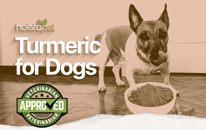 turmeric for dogs featured blog image