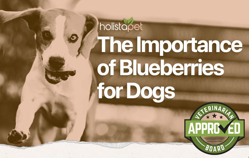 blueberries for dogs featured blog image