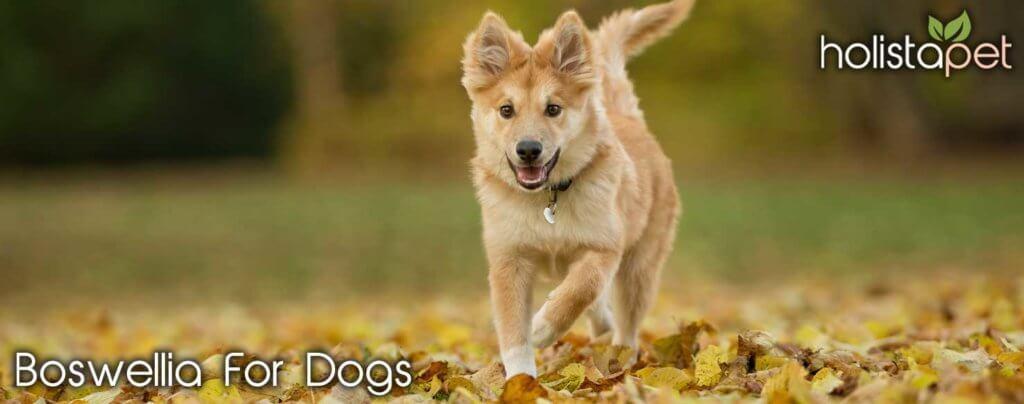 dogs boswellia