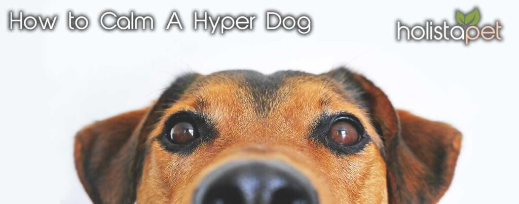 How to calm your hyper dog holistapet banner