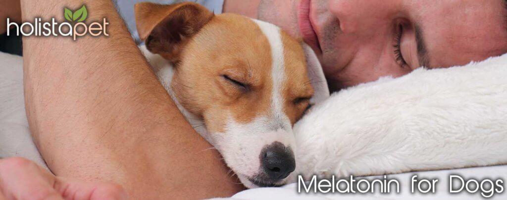 Melatonin for dogs holistapet banner