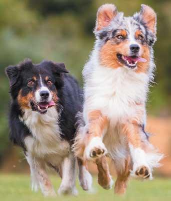 hyper dog breeds