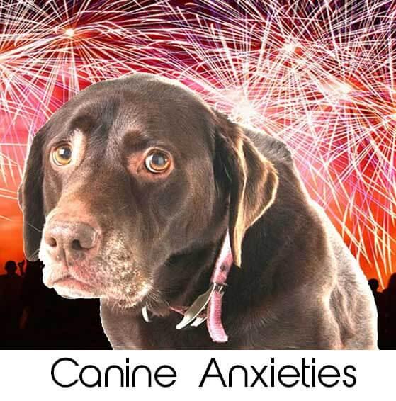 canine anxieties