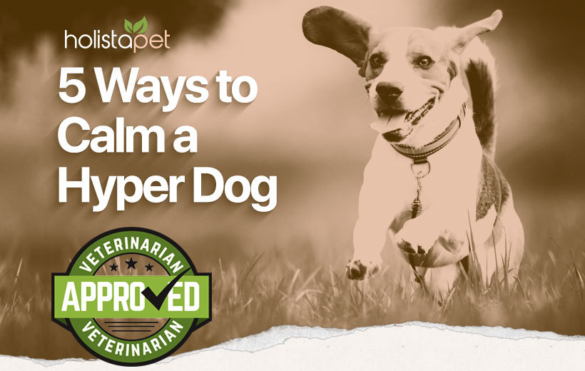 how to calm a hyper dog blog featured image