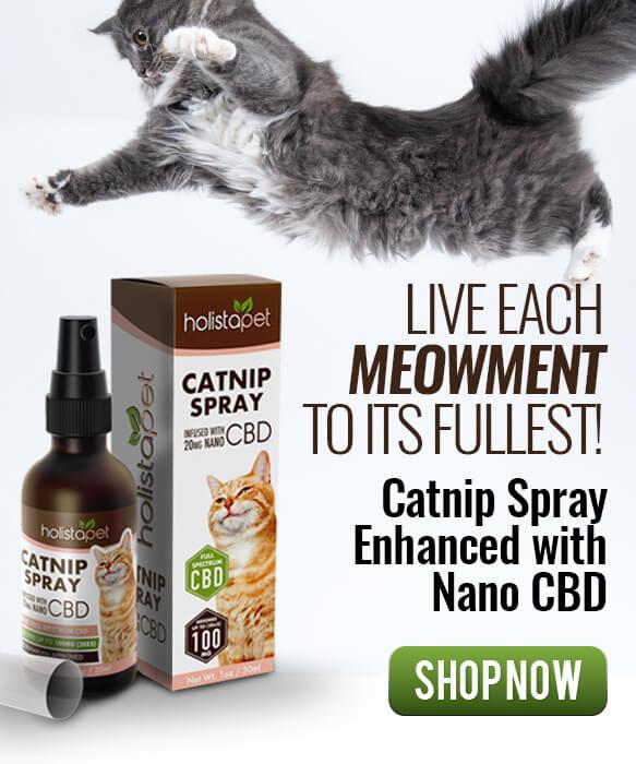 CBD snacks for cats
