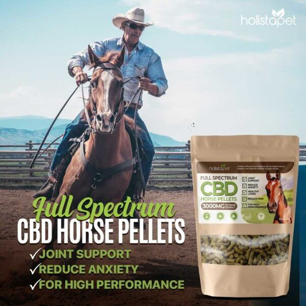 full spectrum CBD horse pellets supports joints and reduces anxiety riding horse