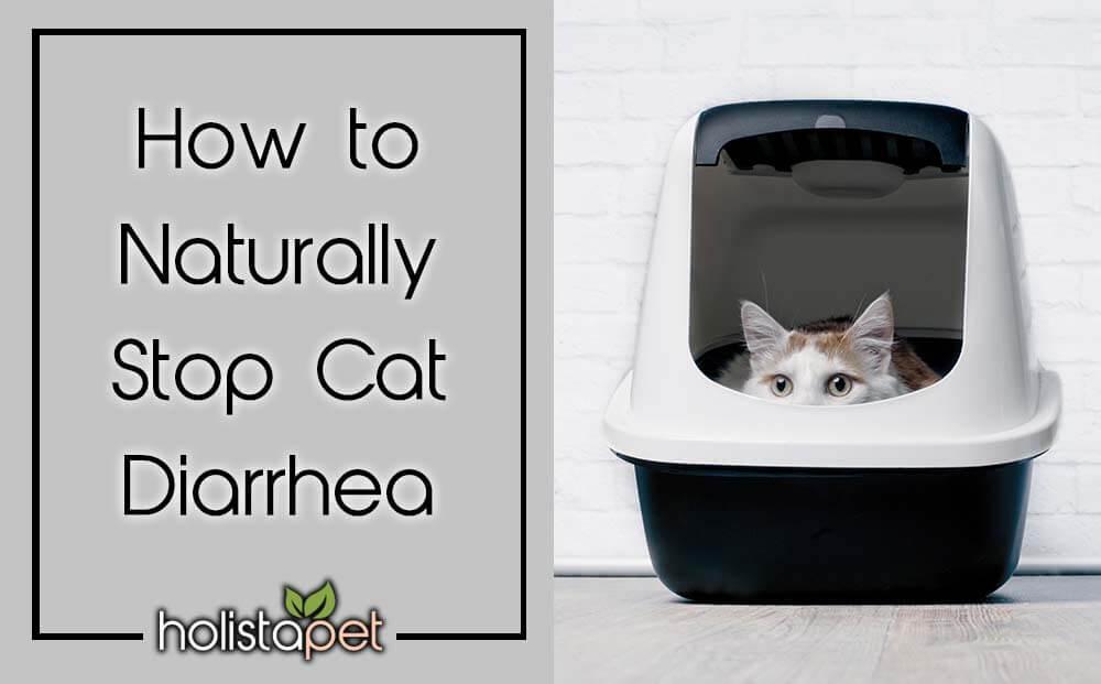 How to naturally stop cat diarrhea featured blog image