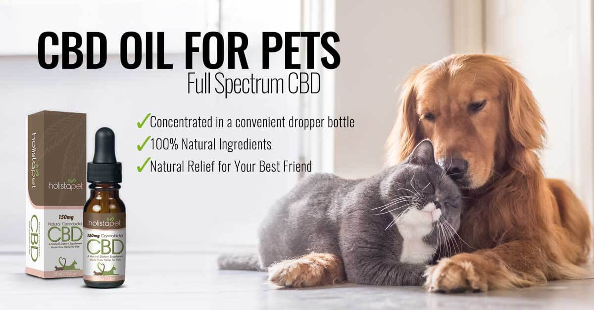 holistapet cbd oil for cats and dogs banner with two pets and a picture of tincture