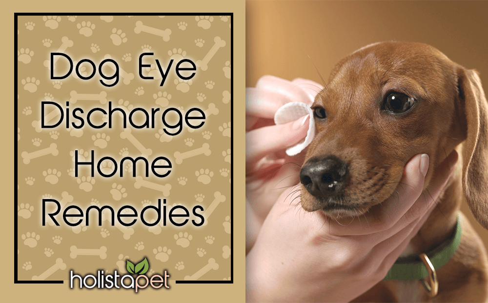 dog eye discharge home remedies featured blog image