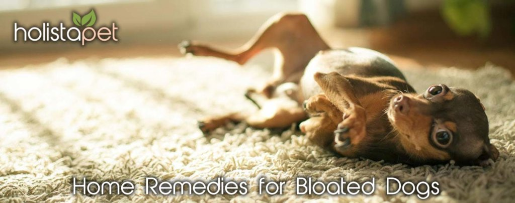 home remedies for bloated dogs