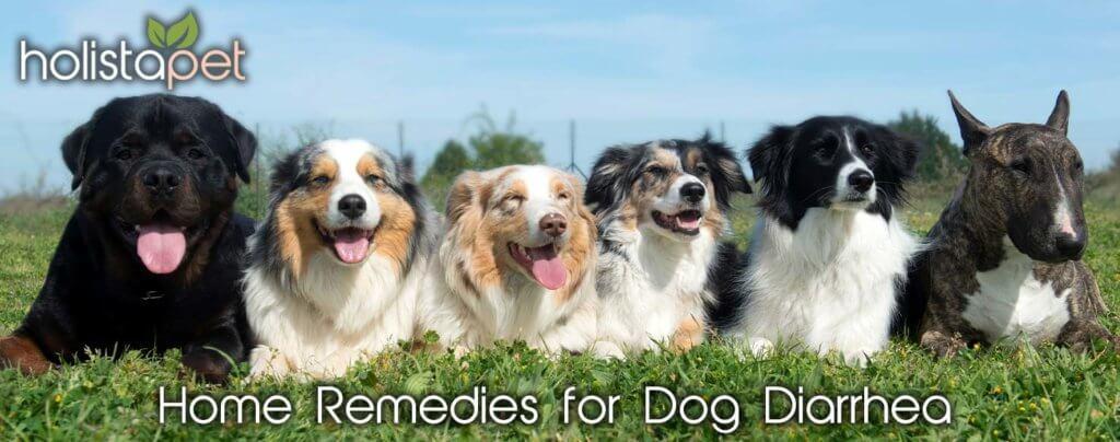 dog diarrhea home remedy 2020