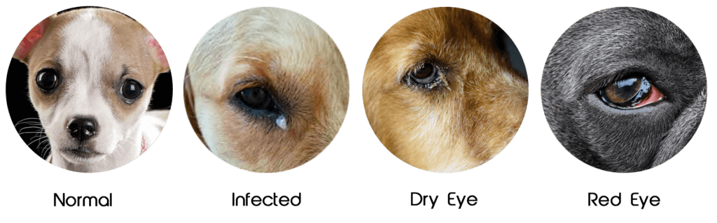different type of eye concerns in dogs