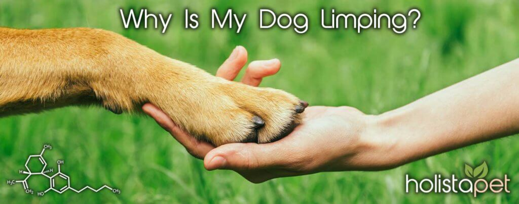 why-is-my-dog-limping-banner