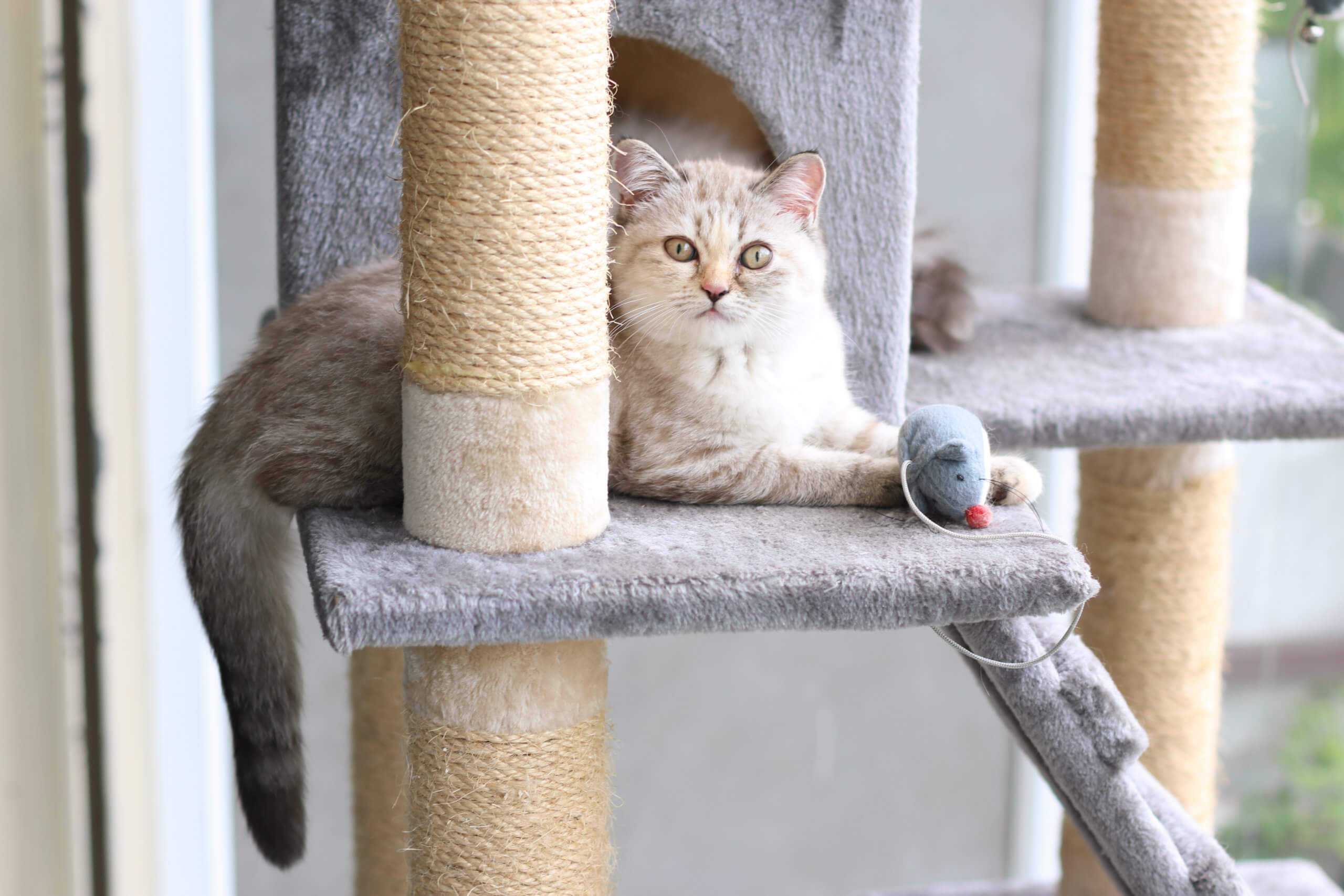 cat lounging on its scratching post