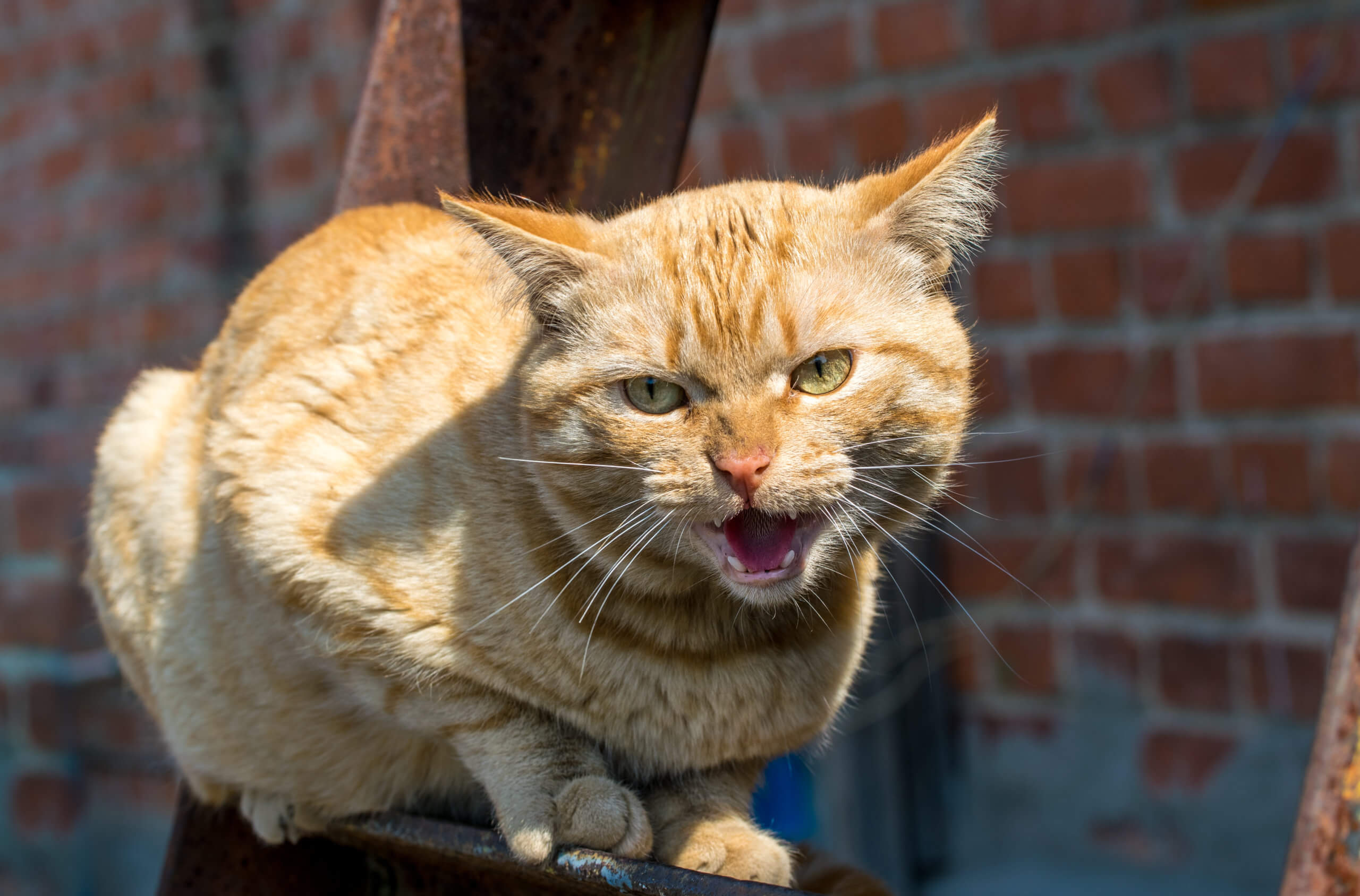 how to calm an aggressive cat