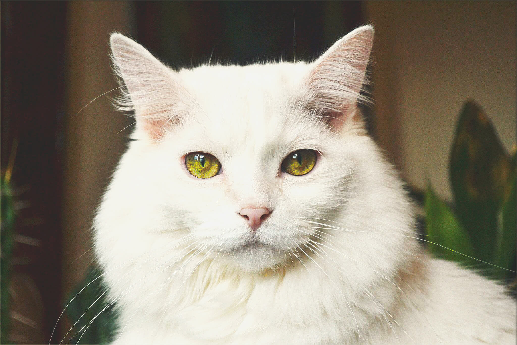 white feline staring into the camera