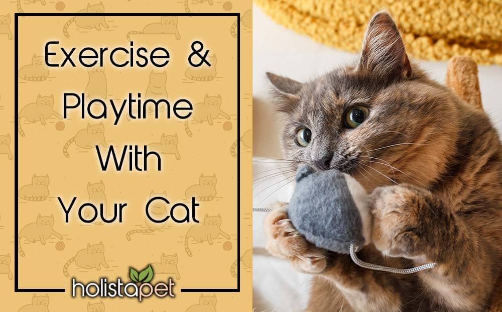 cat exercise and how to play with a cat