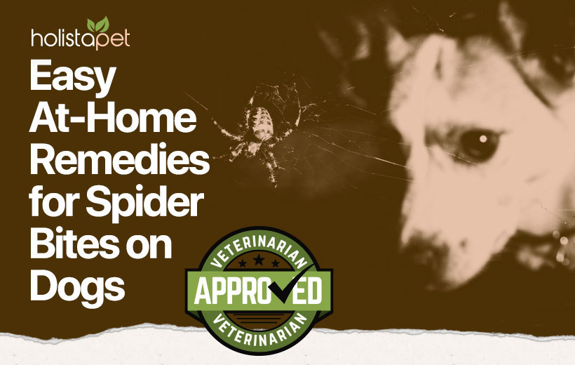 home remedy for spider bites on dogs featured image