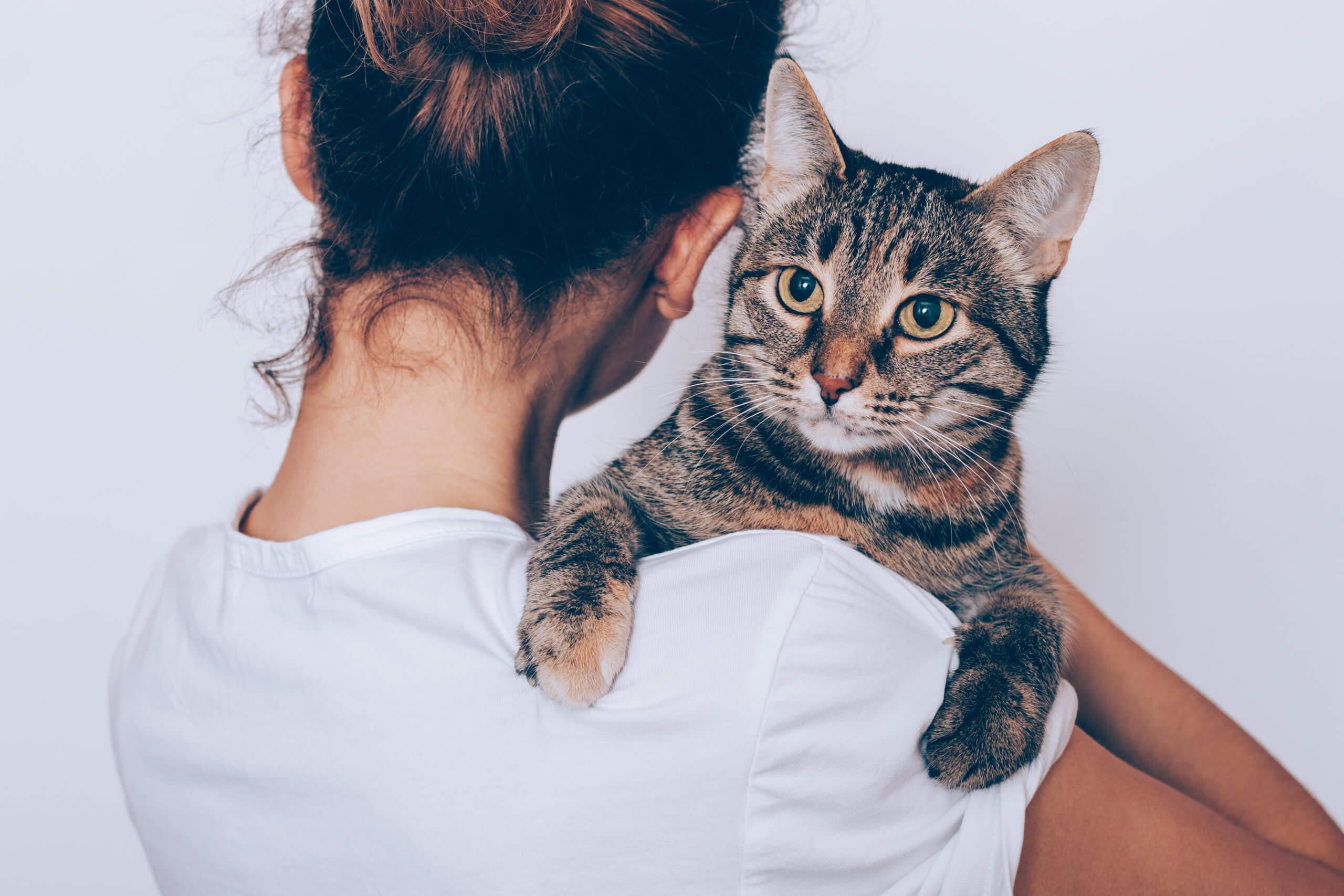 feline being held by it's owner