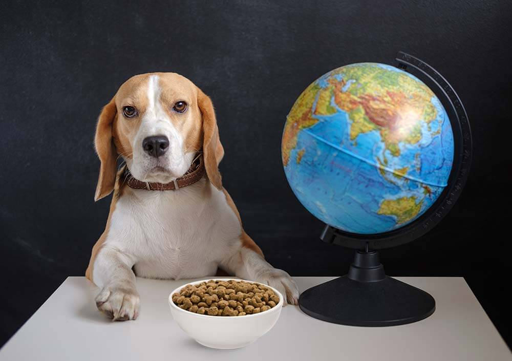 dog with paws on table next to a globe