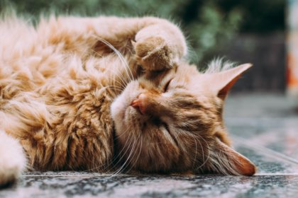 itchy cat home remedy