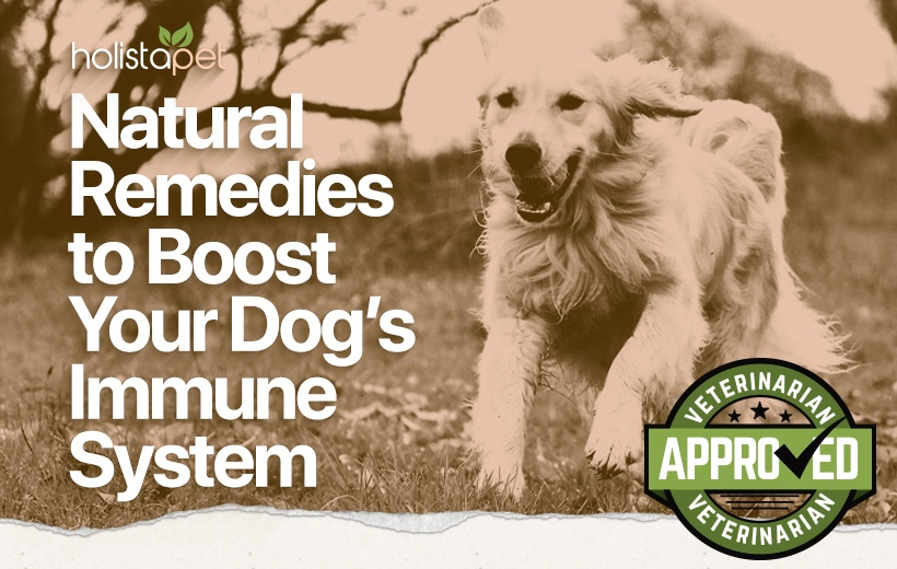 dog immune system booster blog featured image