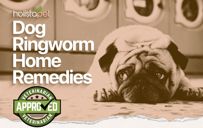 dog ringworm home remedies blog featured post