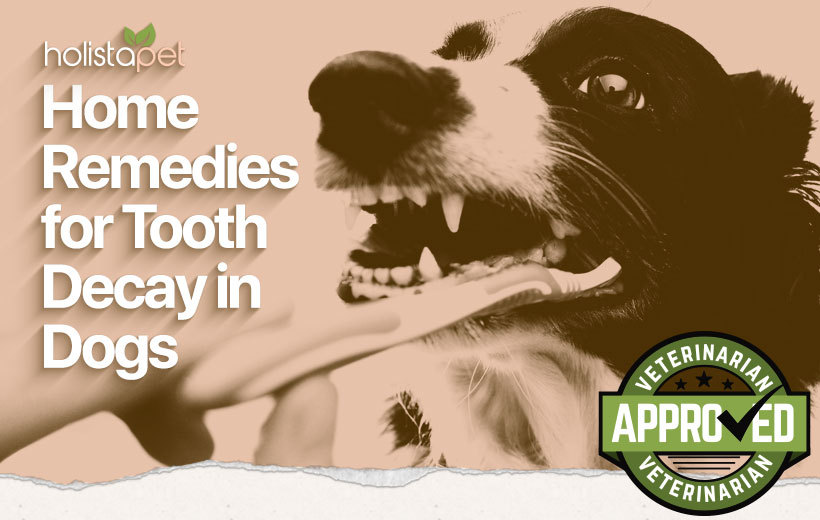 dog tooth decay home remedy featured blog image