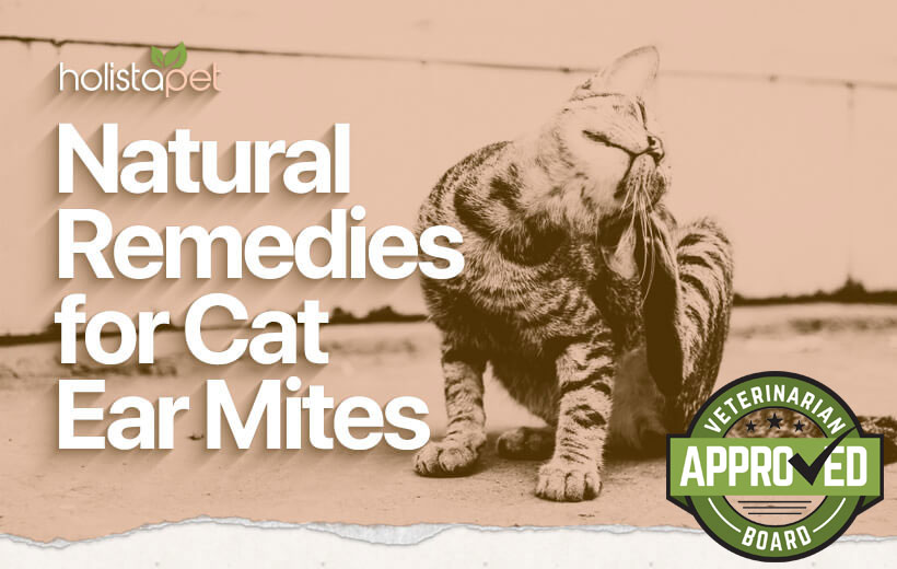 natural remedies for cat ear mites blog featured image