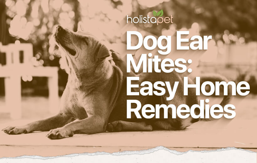 dog ear mites home remedy olive oil