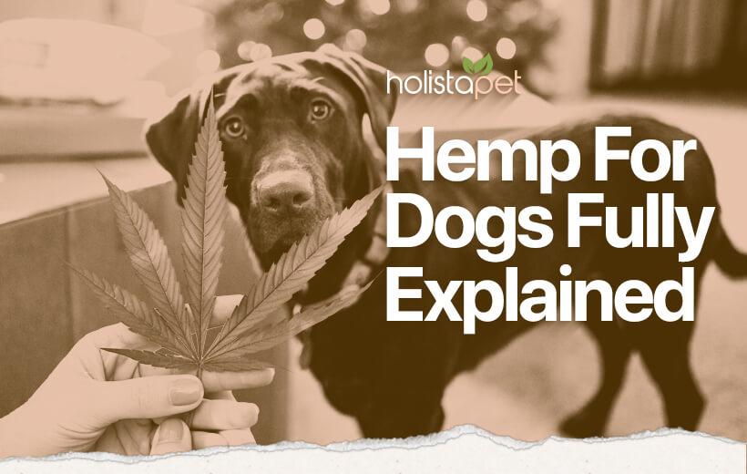 hemp for dogs holistapet