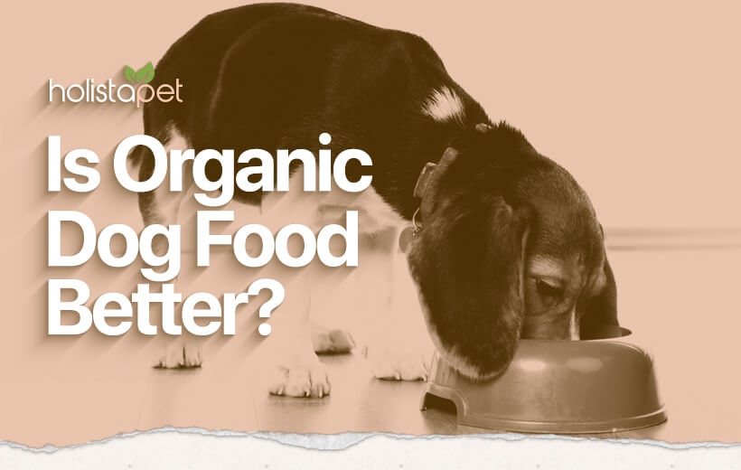 organic dog food vs non organic